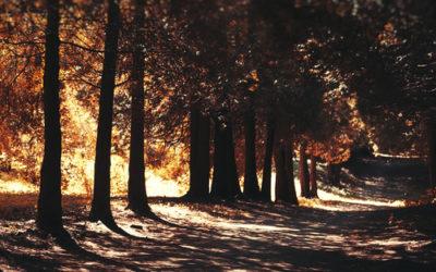 A Mysterious Autumnal HaikuNew
